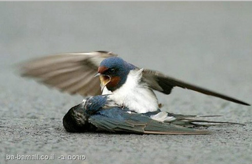 Bird-Dead-4 2