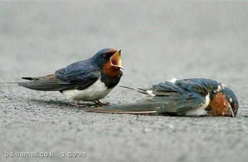 Bird-Grieving-5