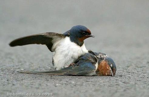 Bird-dead-3b 2