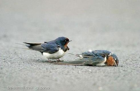 bird-dead-3 2