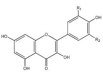 Flavonols 3