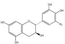 Catechin (2) 2