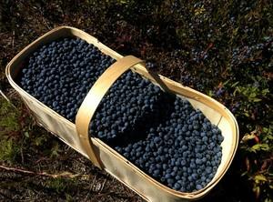 Blueberries basket