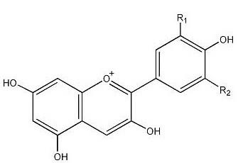 Anthocyanins (3) 4